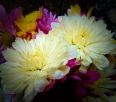 Flowers for a new Month by GUDRUN355