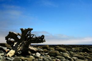 Lonely stump by Dudovitz