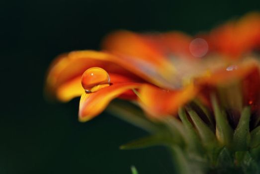 Endless Orange by Tracys-Place