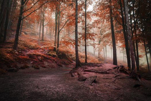 the forest of my dreams III by JoannaRzeznikowska