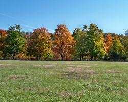 Stages of Fall by DelphiRose