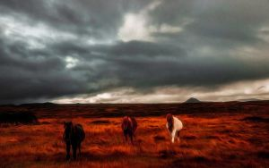 Wild Welsh Ponies 6 by welshdragon
