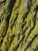 Moss on Tree by KameleonKlik