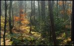 Somewhere in autumn's forest by jchanders