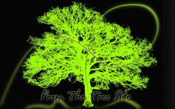 From the tree side by Splact