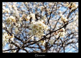 Blossom by SBurgess08
