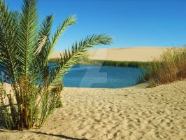 Oasis by Burgi595