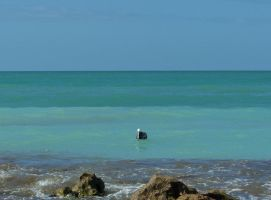 Pelican Bobbing in the Gulf by Dream-finder