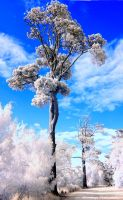 Victorian IR 3 Lake Wendouree Tree by Okavanga