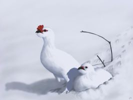 Heart Ptarmigan by CVDart1990