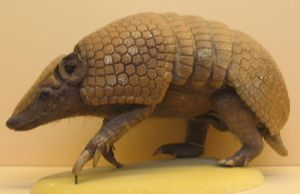 Armadillo by melemel