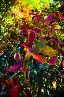 The colors of Mahopac Autumn by Delia-Stock