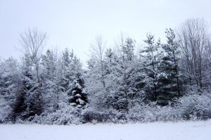 Winter Wonderland Scenery 1 by FantasyStock