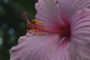 Pink by Clangston
