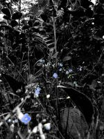 Forget Me - Not. by FlashOfGrey