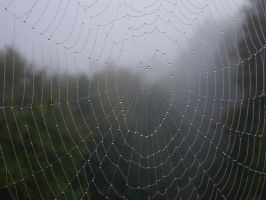 Spiderweb droplets by decors