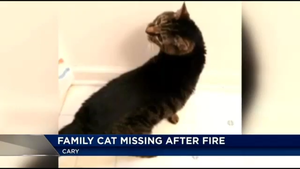 My Cat was on the News by Maddster74