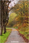 A colorful path by Gex78