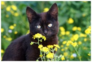 Blooming Cat by McSes