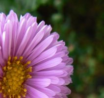 Purple Close up flower by thetoddclan