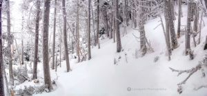 Frosted Forest by Locopelli