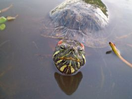 Turtle by Fritters