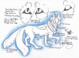 .:Adam Arctic Sheet Ref 2012:. by SillyTheWolf