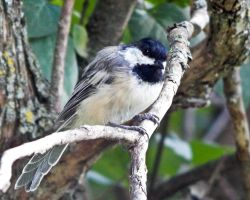The Feathered Fowl of The Air by CRGPhotography