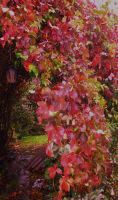 Colours of Autum by blackrose1959