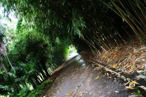 Bamboo Alley by Razamanaz