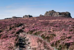 Stiperstones 3 by CharmingPhotography