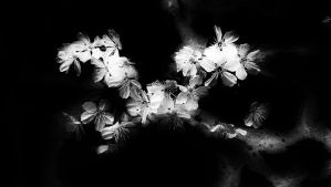 Blossom In The Dark by graphic-rusty