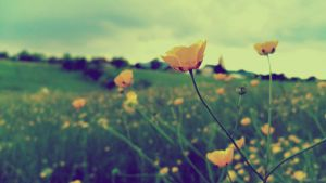 Field of Gold by Lady-Deliah