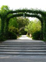 Vine Arch by bean-stock