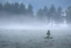Alone in the Mist by netrex
