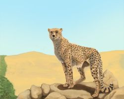 Cheetah - Trade by SamuraiDragon