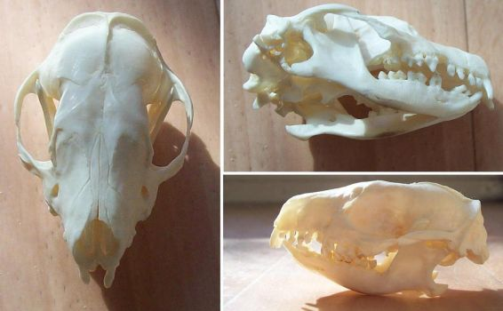 Hedgehog Skull by RoanSerpentia