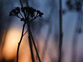 tansy sunset by efeline