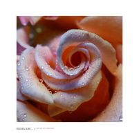 ROSES ARE... by halo-monk