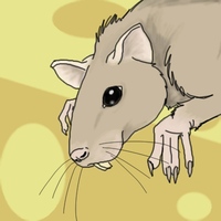 A Rat by Taillone