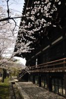 In kyoto spring-6 by Bros-Chu
