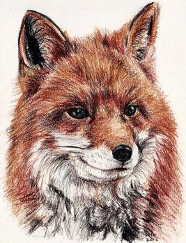 Red Fox by Mastertypo