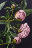 Peonies by Vineris