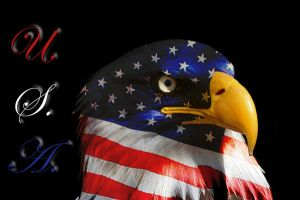 USA Eagle by happygilmo07