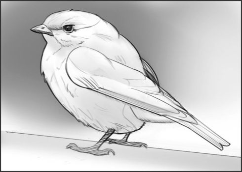 bird sketch by JerichoRus