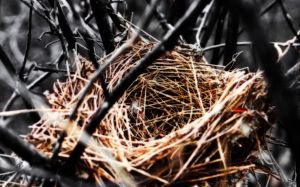 Nest by LiisaP