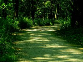 Summer Pathway 5 by TropicalxLondon
