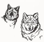 A Study of Wolves - Expressions by Angel-Pup