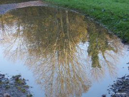 Puddle reflection by ancoben