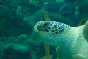 sea turtle 2 by MLeighS